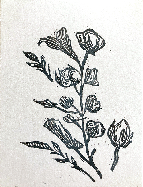 Black and white line illustration of a cotton plant on white paper.