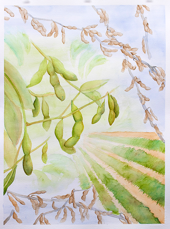 Watercolor painting of soybean plants and soybean fields.