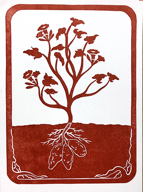 Red ink printed imaged of plant with three sweet potatoes growing beneath the soil.