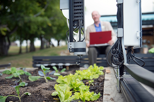 "One of two autonomous farming robots, or ""Farmbots,"" operated by MSU's Students for Sustainable Campus organization, maintains a 5' by 10' bed at MSU's Community Garden. (Photo by Megan Bean)"